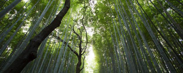 header-0002-trees